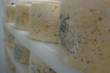 Green Mountain Blue Cheese and Boucher Family Farm