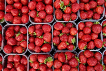 Strawberry Festivals are a Sweet Celebration