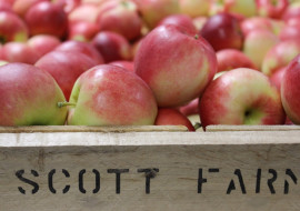 Scott Farm Orchard and Market