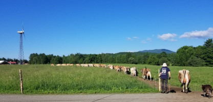 Meet the Dairy Farm: Butterworks Farm