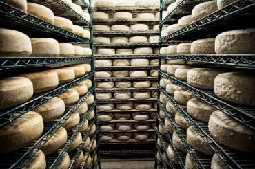Explore cheese: Open Farm Week 2018