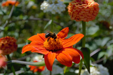 Billings Backyard: Beekeeping & Pollinators | Billings Farm & Museum