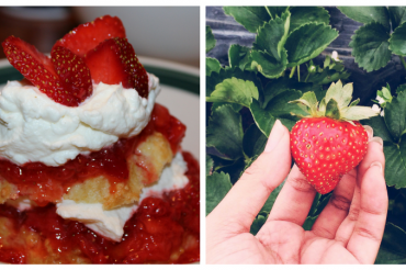 Vermont Strawberry Festivals are a Taste of the Season